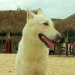 Suki Playa Blanca