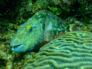 Scuba Diving In Cartagena